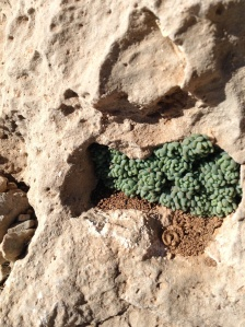 Lovely little tiny green things growing in a seemingly inhospitable space. Taken by my eldest child.